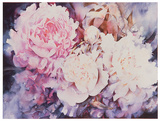 Peonies Print by David Maddern