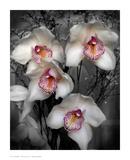 Cymbidium Orchid White Plakat autor Igor Maloratsky