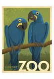 Zoo Parrots Prints by  Anderson Design Group