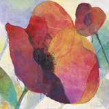 Poppy I Prints by Doug Kennedy