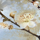 Fresh Blossoms II Prints by A.F. Duealberi
