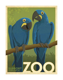 Zoo Parrots Stampe di  Anderson Design Group