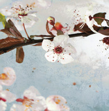 Blossom Morning I Prints by A.F. Duealberi