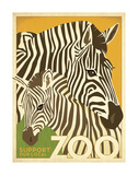 Zoo Zebra Posters by  Anderson Design Group