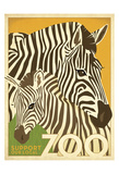 Zoo Zebra Prints by  Anderson Design Group