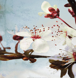 Blossom Morning III Prints by A.F. Duealberi