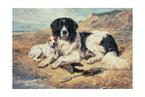 Dogs Watching Bathers, 1900 Giclee Print by John Emms