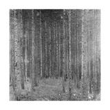 Fir Forest I, 1909 Giclee Print by Gustav Klimt