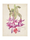 Cactus Flower Giclee Print by Charles Rennie Mackintosh