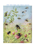 The Busy Bees and their Cousins Giclee Print by Maud Scrivener