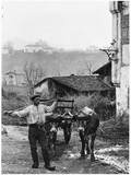Cart Pulled by Two Oxen in the Basque Country, c. 1900 Fotodruck von  Ouvrard