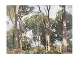 Trees in Sunlight Giclee Print by Harry Watson