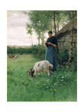 A Dutch Girl with Goat and Chickens, c.1910 Giclee Print by Willy Martens