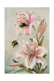 Bees and Lilies, Illustration from 'stories of Insect Life' by William J. Claxton, 1912 Giclee Print by Louis Fairfax Muckley