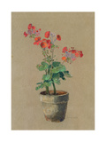 Geraniums in a Pot Giclee Print by Odilon Redon