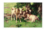 Three Calves in the Shade of a Tree Giclee Print by David Gauld