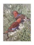 Eclectus Parrot, 1917 Giclee Print by Marian Ellis Rowan