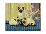 Three Siamese Cats Giclee Print by Winifred Humphery