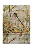 Dragonfly and Mayfly, Illustration from 'Stories of Insect Life' by William J. Claxton, 1912 Giclee Print by Louis Fairfax Muckley