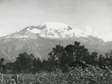 Mount Kilimanjaro, Tanzania, 1920 Fotografie-Druck von  English Photographer