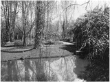 Claude Monet's (1840-1926) Garden at Giverny, 1914 Photographic Print by  French Photographer