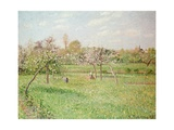 Apple Trees at Gragny, Afternoon Sun, 1900 Giclee Print by Camille Pissarro
