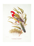 Yellow-Mantled Parakeet from 'Birds of Australia' by Gregory Macalister Mathews (1876-1949) and… Giclee Print by Hendrik Gronvold