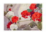 Red and White Geraniums Giclee Print by Richard E. Clarke
