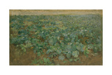 The Turnip Field Giclee Print by Edward Stott