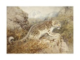 Snow Leopard, c.1920 Giclee Print by William Woodhouse