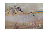 Mallards Chased by a Hawk, Illustration from 'Wildfowl Anf Waders' Giclee Print by Frank Southgate