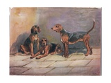 Dogs, Illustration from 'Hounds' Giclee Print by Thomas Ivester Lloyd
