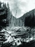 Timber in Sugag, Romania Photographic Print
