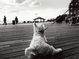 Coney Island Dog, NY, 2006 Photographic Print