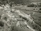 Timber Photographic Print