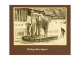 A White Elephant in the Court of King Prajadhipok Giclee Print