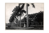 Group of Two Men and a Woman under a Palm Tree During the Construction of the Panama Canal, 1912… Giclee Print by  Byron Company