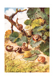Land Snails, Illustration from 'Country Days and Country Ways' Giclee Print by Louis Fairfax Muckley