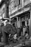 An Elephant Collects Tips from the Prostitutes on Falkland Road for Good Luck, Mumbai, 1980 Fotografisk trykk