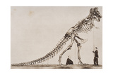 Skeleton of the Tyrannosaurus Rex, in the American Museum of Natural Histor Giclee Print by  English School