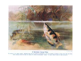 A Sportsman Among Fish, Illustration from 'Wonders of Land and Sea', Publis Giclee Print by Arthur Twidle