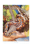 Giant Python, Illustration from 'The New Natural History', by John Arthur Thompson (1861-1933),… Giclee Print by Warwick Reynolds