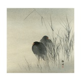 Two Moor Hens Standing in Misty Sedges, 1900 Giclee Print by Seiko Okuhara