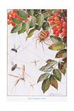 The Spider's Webb, Illustration from 'Country Ways and Country Days' Giclee Print by Louis Fairfax Muckley