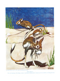 The Jerboa, Illustration from 'The New Natural History', by John Arthur Thompson (1861-1933),… Giclee Print by Warwick Reynolds