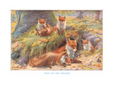 Vixen and Her Children, Illustration from 'Country Ways and Country Days' Giclee Print by Louis Fairfax Muckley