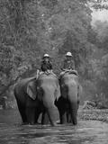 Elefanter Fotografisk tryk