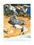 The Grey Seal, Illustration from 'The New Natural History', by John Arthur Thompson (1861-1933),… Giclee Print by Warwick Reynolds