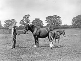 Prize Horses at Sandringham, from 'The English Country House' Photographic Print by  English Photographer