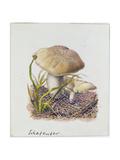 Study of Fungi Giclee Print by Josef Fleischmann